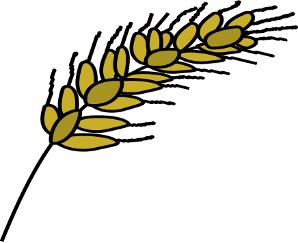 espiga trigo
